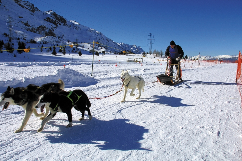 sleddog adamello ski valle camonica sci