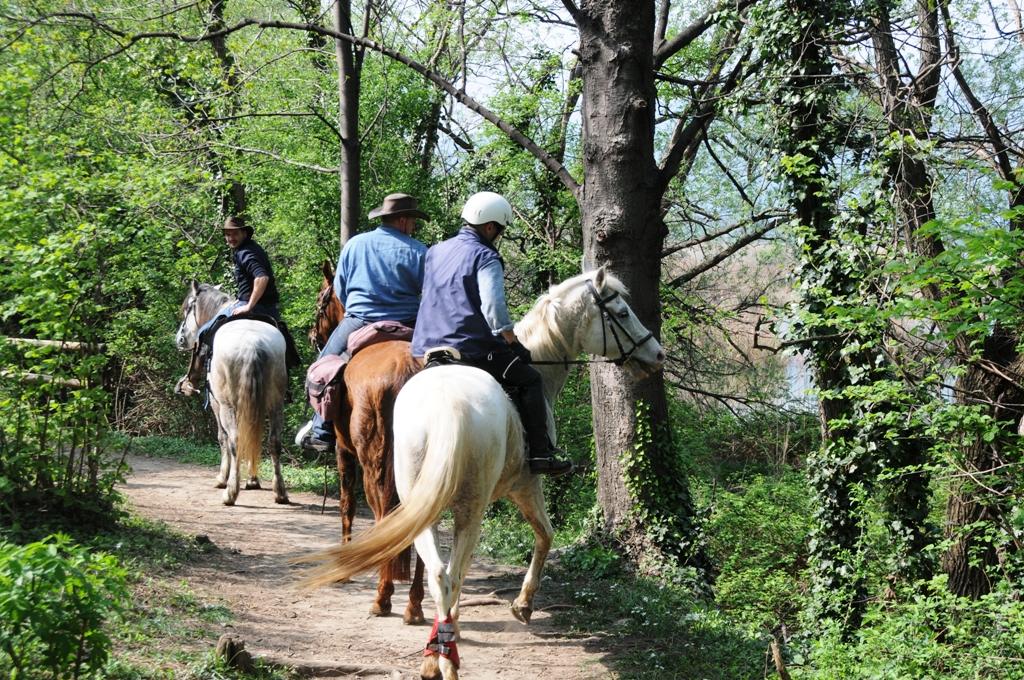 Val trompia_cavalli_equitazione_web
