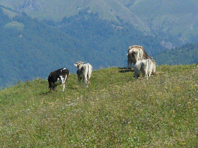 formaggio nostrano valle trompia pascolo