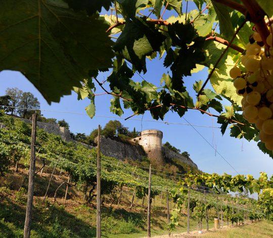 Vigneto Pusterla Brescia Castello