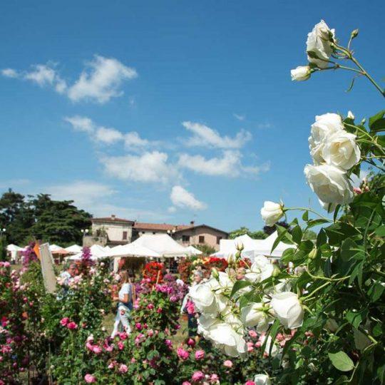 Franciacorta in Fiore