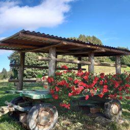 carretto con fiori in malga
