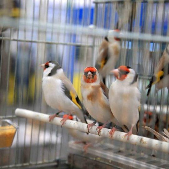Mostra Ornitologica Montichiari