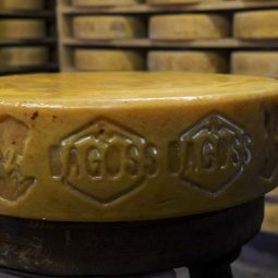 Bagoss Cheese