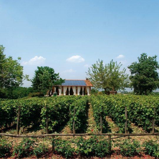 Tenuta La Vigna Winery