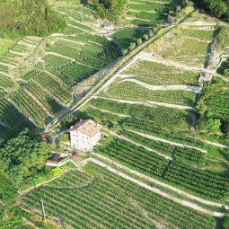 Vigneti Cantina Bignotti Valle Camonica