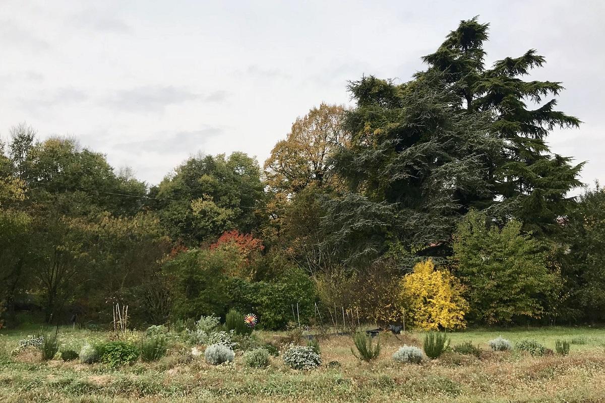 piante aromatiche Officina delle Erbe del Garda