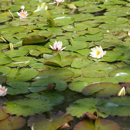 giardino-botanico-andre-heller-gardone-riviera