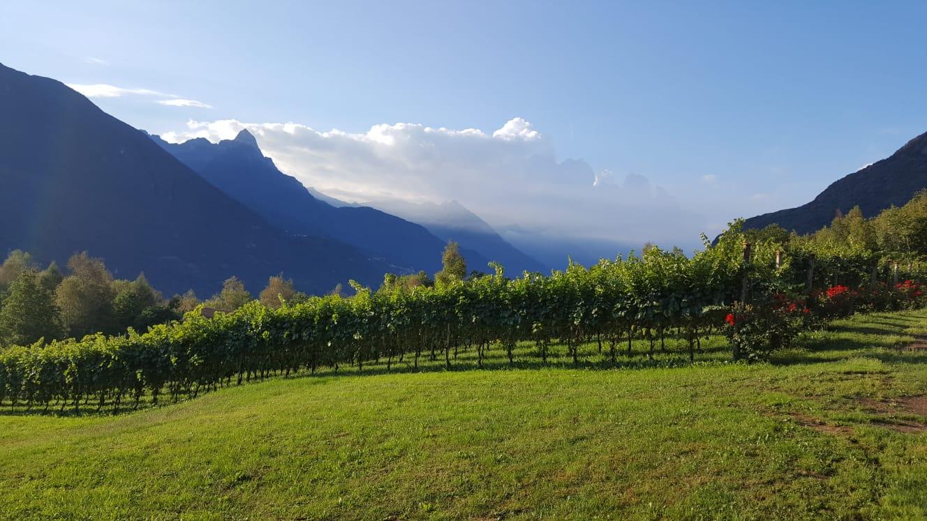 Consorzio vini Valle Camonica - vista dei vigneti con sullo sfondo le montagne camune