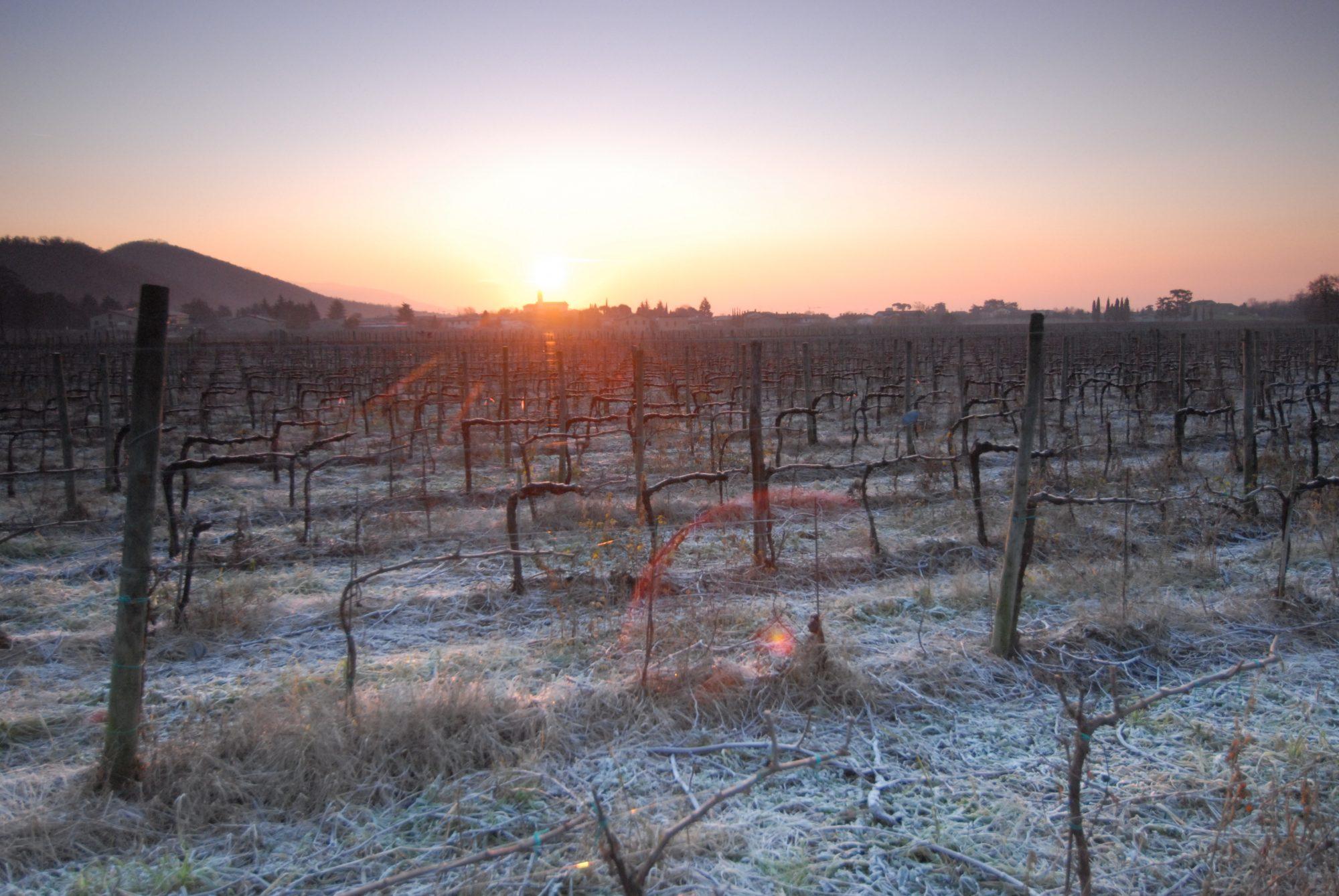 Franciacorta in inverno - ©ConsorzioFranciacorta