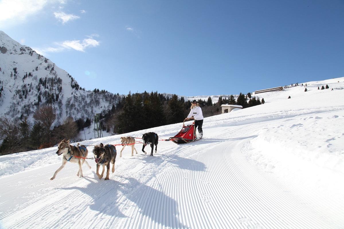 Maniva-sleddog-escursione-cani-slitta